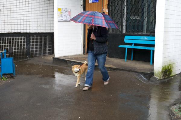 Part18 Домой дома из дома на работу прогулка с собакой Юкой кролик Няша _MG_4133