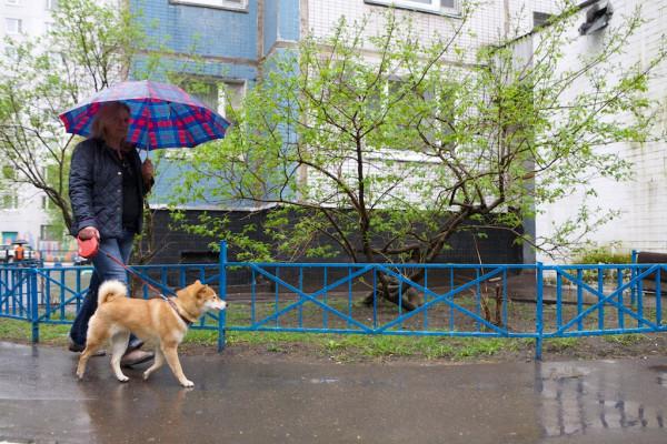 Part18 Домой дома из дома на работу прогулка с собакой Юкой кролик Няша _MG_4163