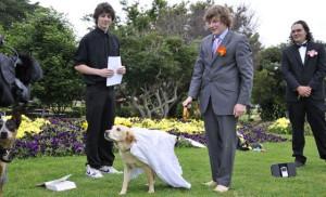 женитьба зоофила