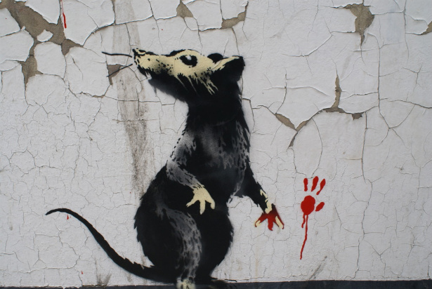 Крыса, загнанная в угол
