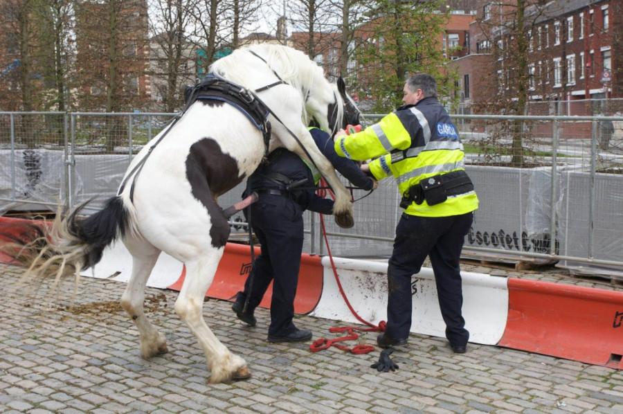 smithfield-horse-fair-1024x681