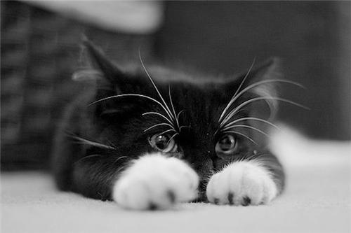 ch-cat_6