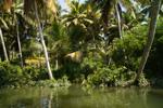 Цивилизованные джунгли и их обитатели