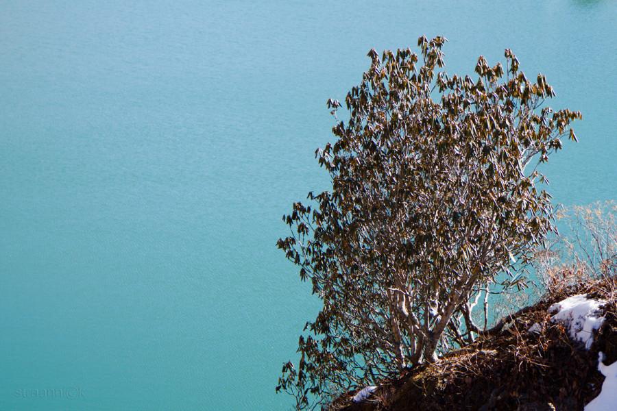 Озеро Цонгмо - ледниковое озеро в Восточном Сиккиме, Индия. Tsongmo Lake - a glacial lake in the East Sikkim, India