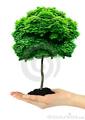 Фотостоки, микростоки. Темы (тренды) апреля.  День посадки деревьев. Arbor day