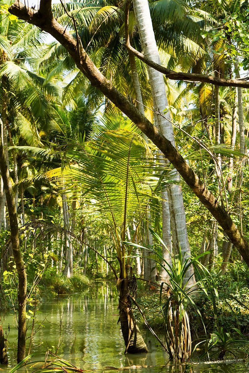 Kerala Backwaters (India)