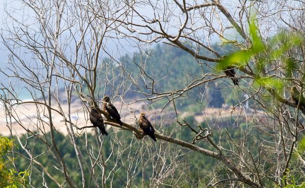 Орлиный пик (Керала, Индия). At the Eagle point (Kerala, India)