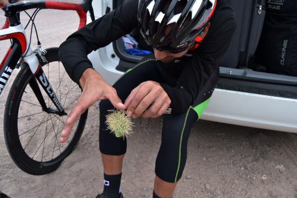 111_cesar_grajales_stradalli_cactus