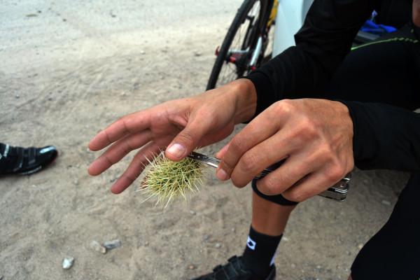 99_cesar_grajales_stradalli_cactus