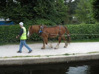 A horse drawing a barge at Llangollen