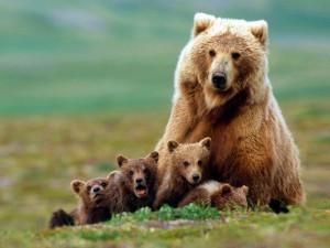 Медведица_1.jpg