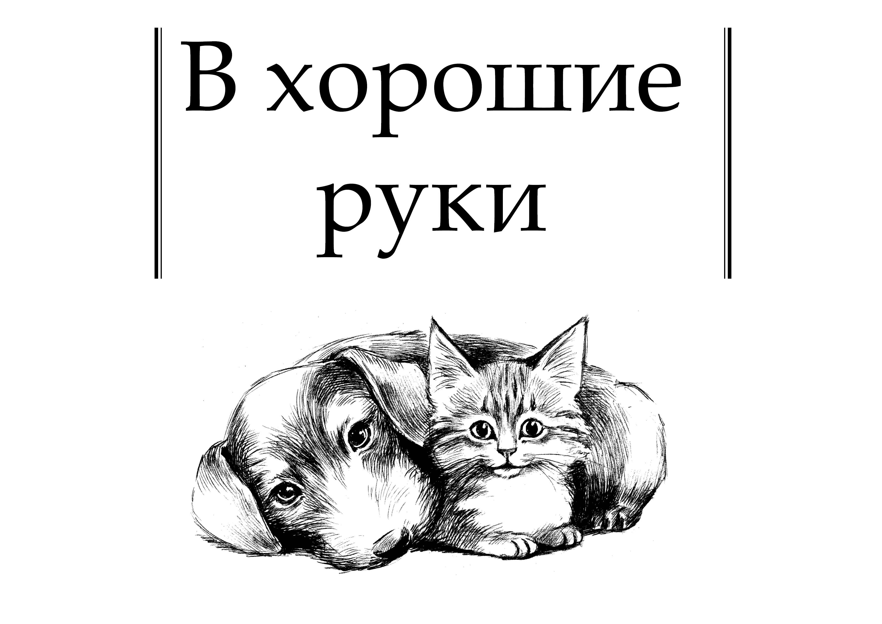 котята в добрые руки картинка надпись жилище