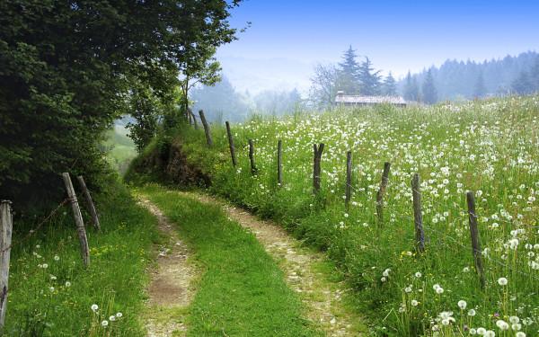 paths5