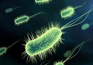 Bacterias300