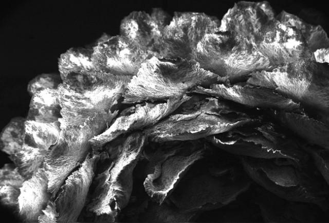 Анастасия Тюрина - Хвойная шишка