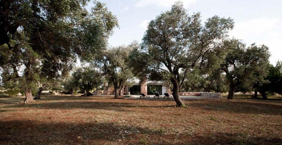 Italian-House-Olive-Trees-Main