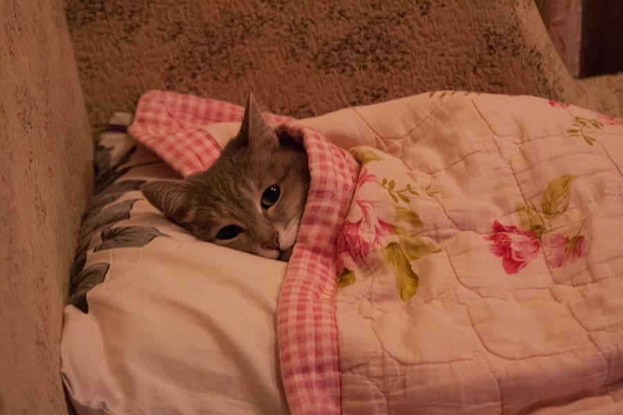 Перед сном-ss