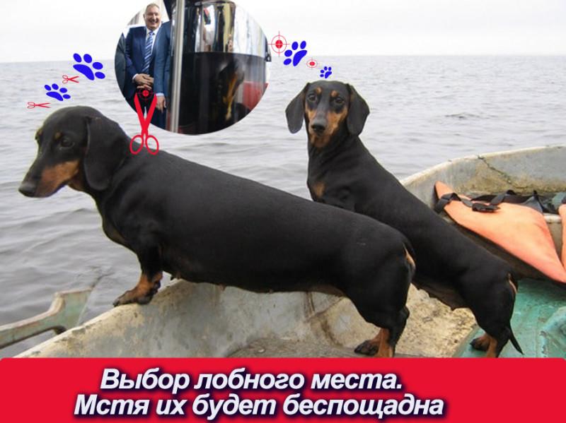 такса рогозин мстя++.jpg