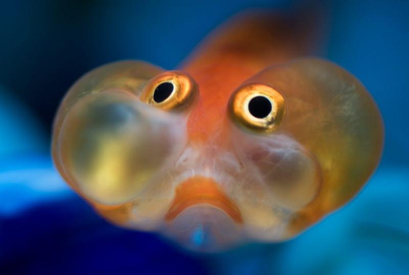 Настя Рыбка подробности