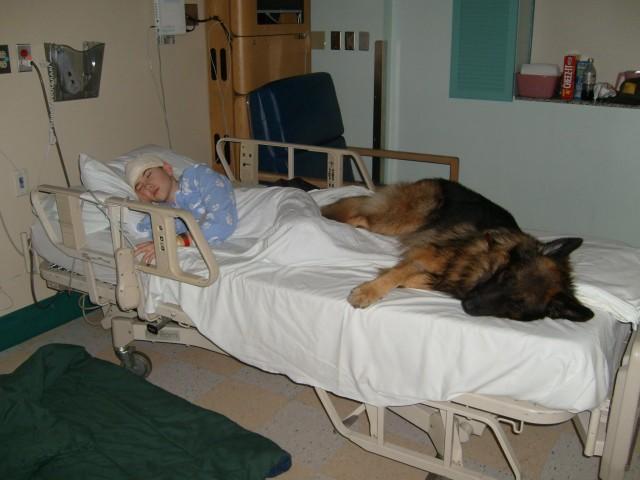 Киннес-терапия, собакотерапия, социальная работа с использованием животных, собака-помощник, собака в больнице