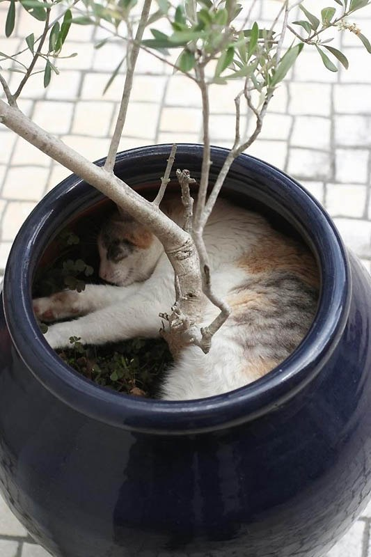 котики котэ фото картинки няшки