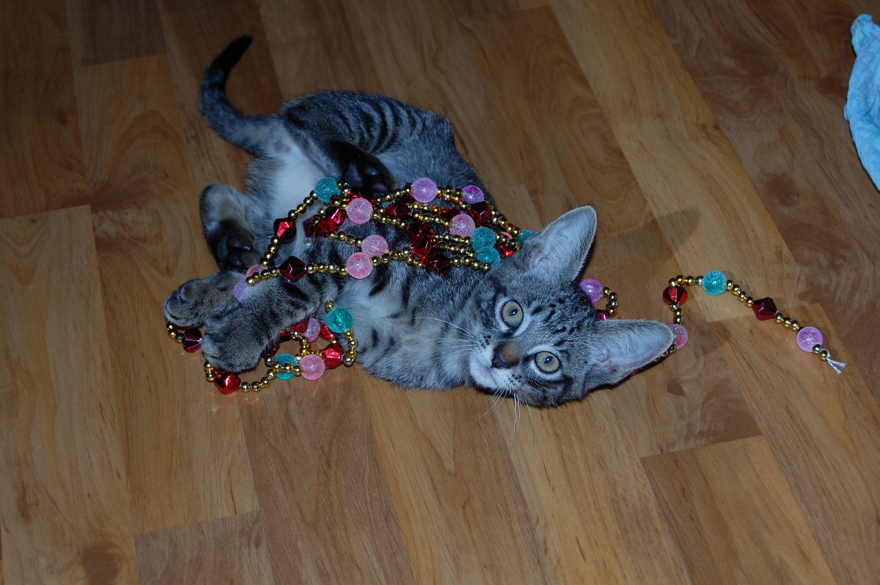 котик стукалова