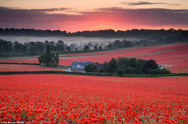 15077636-7168993-Sunrise_over_a_poppy_field_in_Worcestershire_on_the_morning_of_t-a-49_1561161597793.jpg