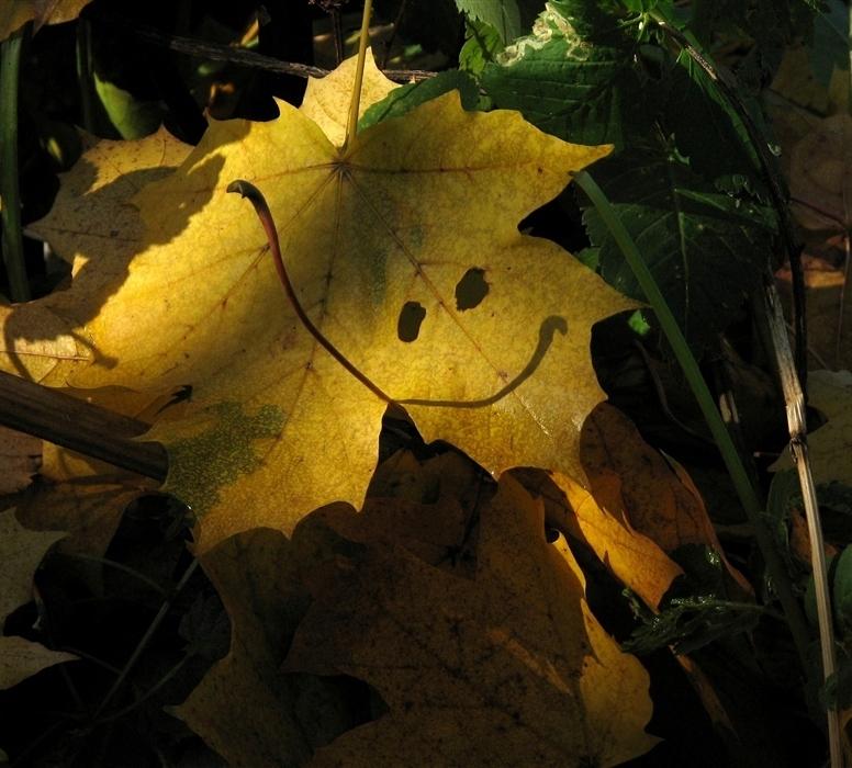 картинки осень наступила след улыбка осени лист милый