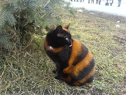 Котик10