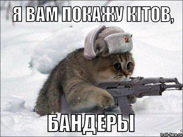 Котик7