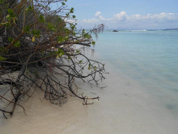 Маврикий 1