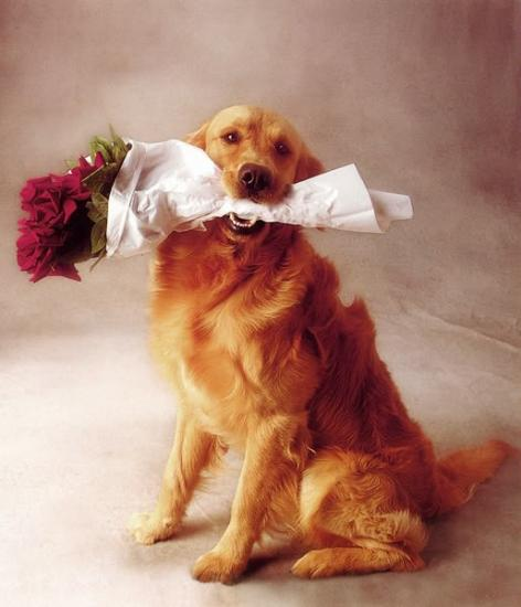Картинки по запросу собака с букетом картинка