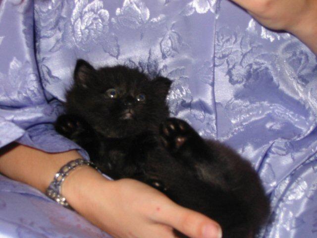 Ursa as a kitten