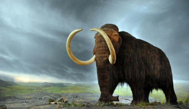 Mammoth0