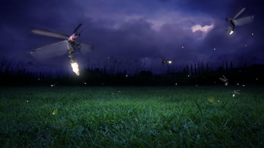 firefly0