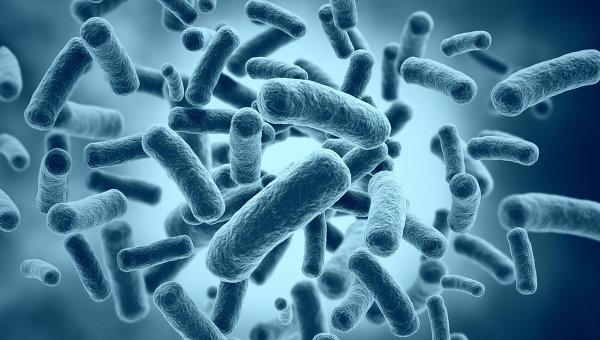 Bacteria0
