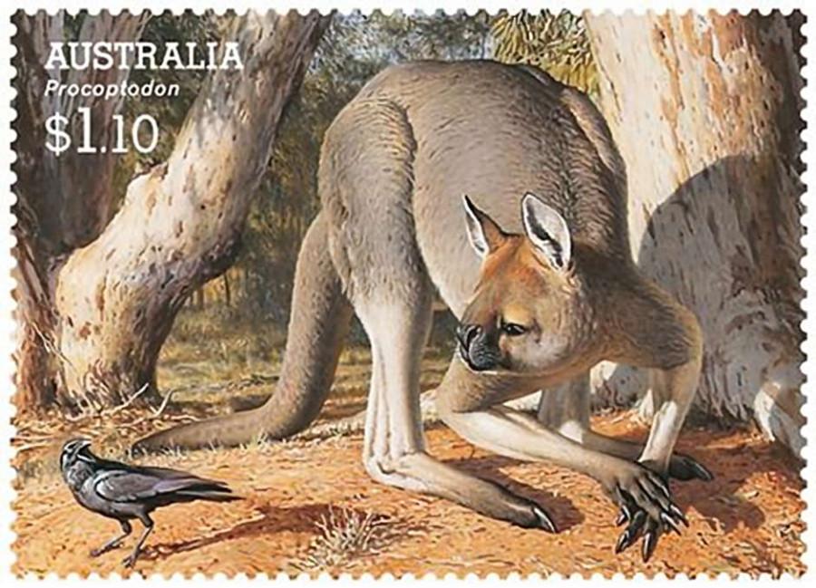 procoptodon