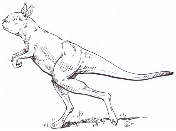 procoptodon _2