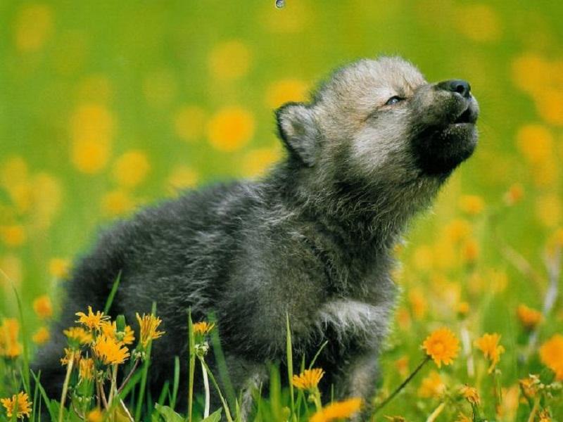 werewolf_2