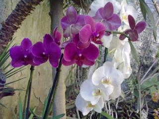 Никисткий ботсад. Орхидеи