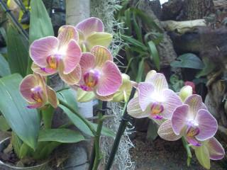 Никитский ботсад. Орхидеи