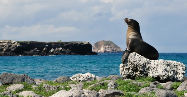 Custom-Lodge-Galapagos-2-sea-lion