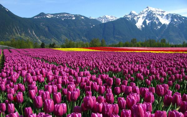 flower-fields-13_druclimb_nc