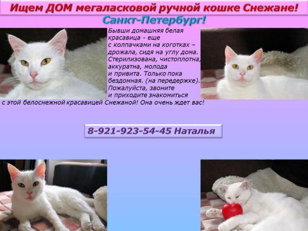 Санкт-Петербург! Ищем дом мега ласковой ручной кошке Снежане!
