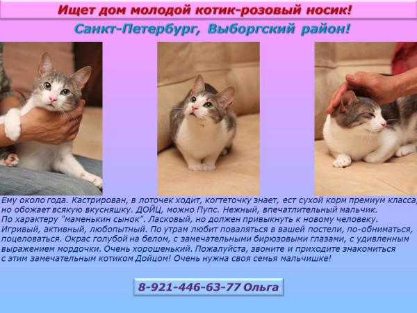 Санкт-Петербург, Выборгский район! Ищет дом молодой котик-розовый носик!