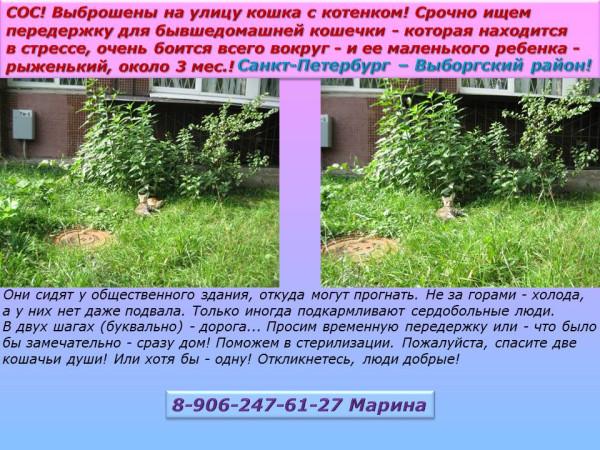 Санкт-Петербург - Выборгский район! Срочно ищем передержку для кошечки с котенком!