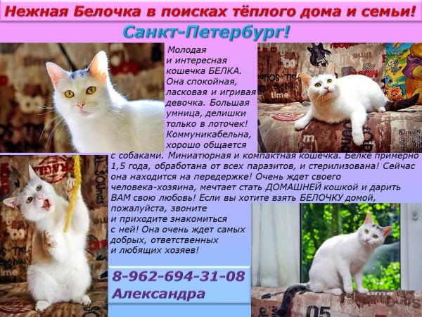 Санкт-Петербург! Нежная Белочка в поиске тёплого дома и семьи!