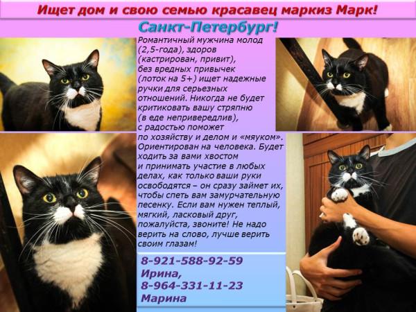 Санкт-Петербург! Ищет дом и свою семью красавец маркиз Марк!