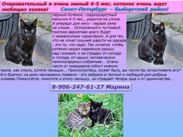 Санкт-Петербург - Выборгский район! Очаровательный 4-5 мес. котенок ждет любящих хозяев!