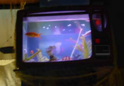 tv aquarium in Rebelo bar. always on the best channel in the world.
